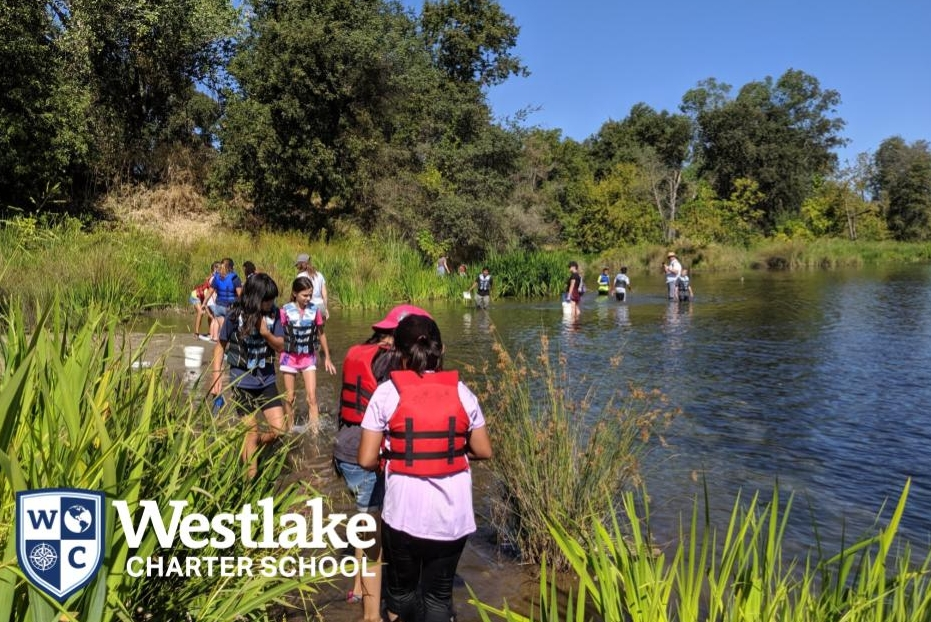 Our 5th graders explored the William B. Pond at the Effie Yeaw Nature preserve to investigate how much energy travels through an ecosystem. #WCSJoyfulLearning